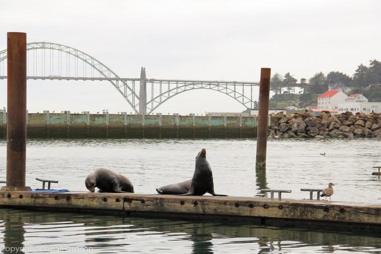 Newport-OR-sea-lions-and-bridge