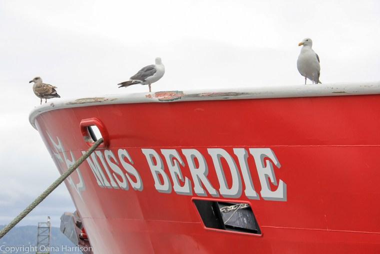 Newport-OR-Miss-Berdie-boat-with-seagulls