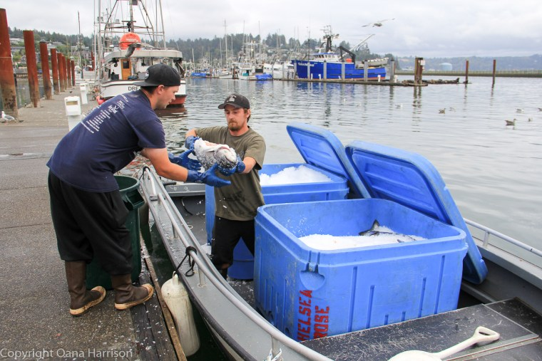 Newport-OR-Chelsea-Rose-man-handing-fresh-tuna-73