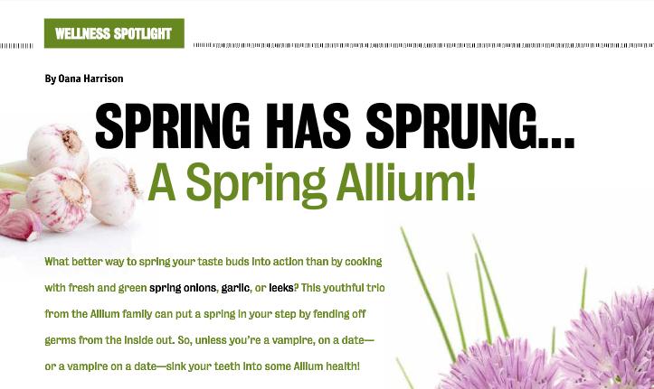 Allium-spring-onion