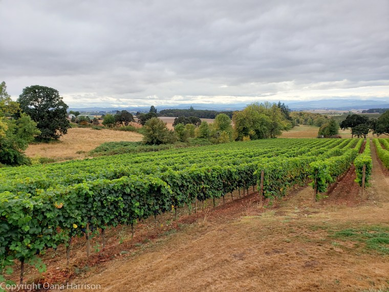 Eola Hills Legacy Winery Salem Oregon rows of grapevines