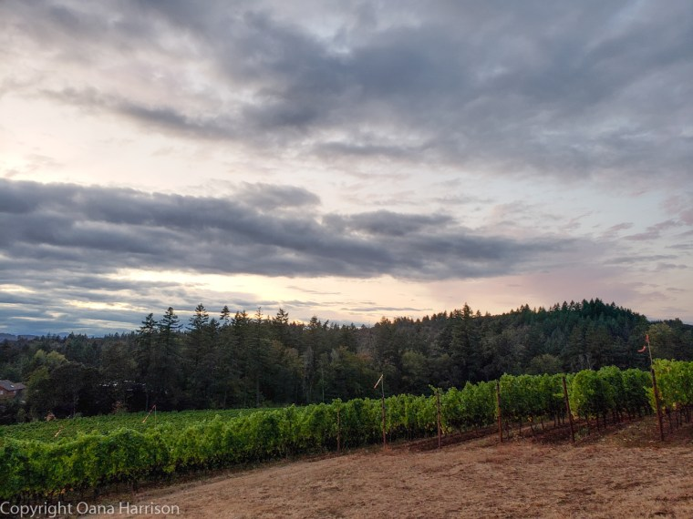 Eola Hills Legacy Winery Salem Oregon cloudy sunset
