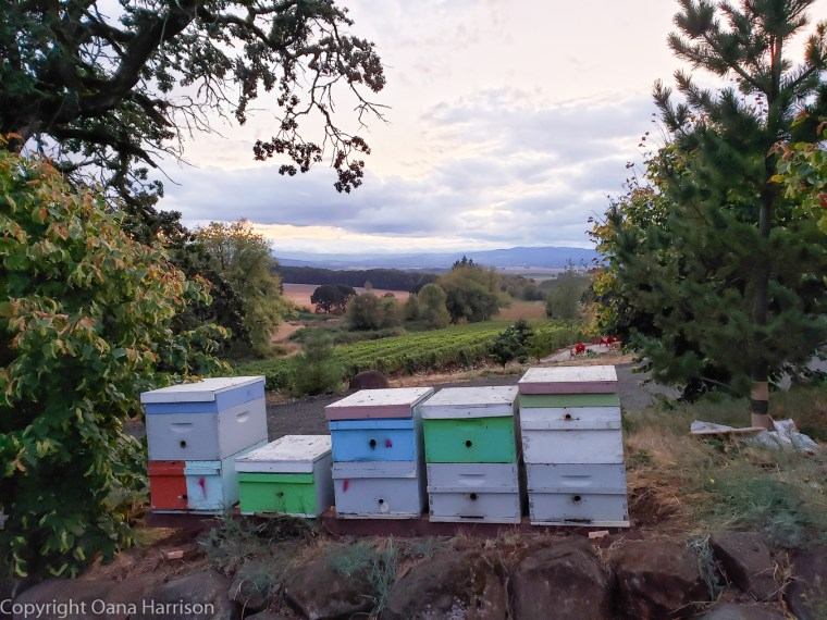 Eola Hills Legacy Winery Salem Oregon honey bee boxes