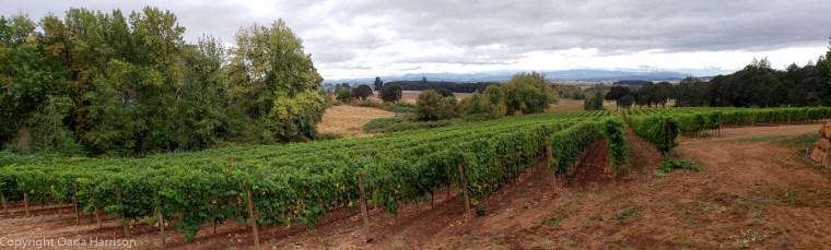 Eola Hills Legacy Winery Salem OR