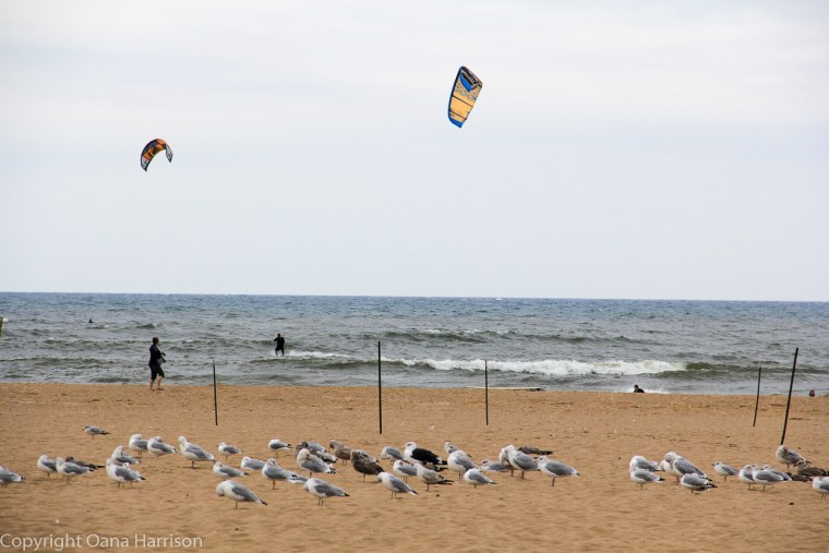 Holland-State-Park-Michigan-beach-seagulls-and-kites