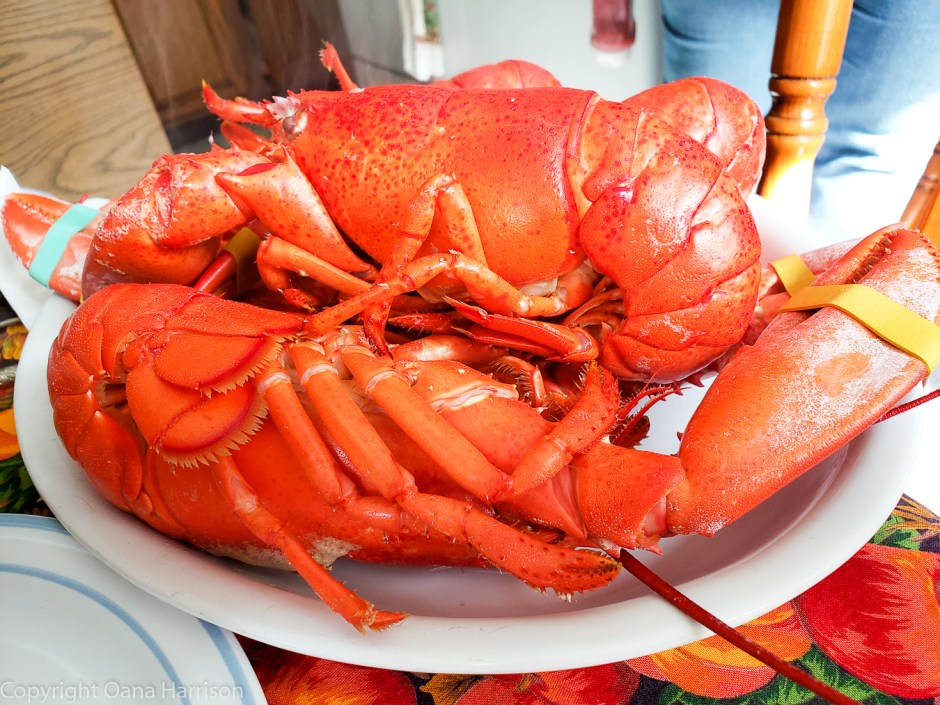Lobster lunch in Skowhegan, Maine