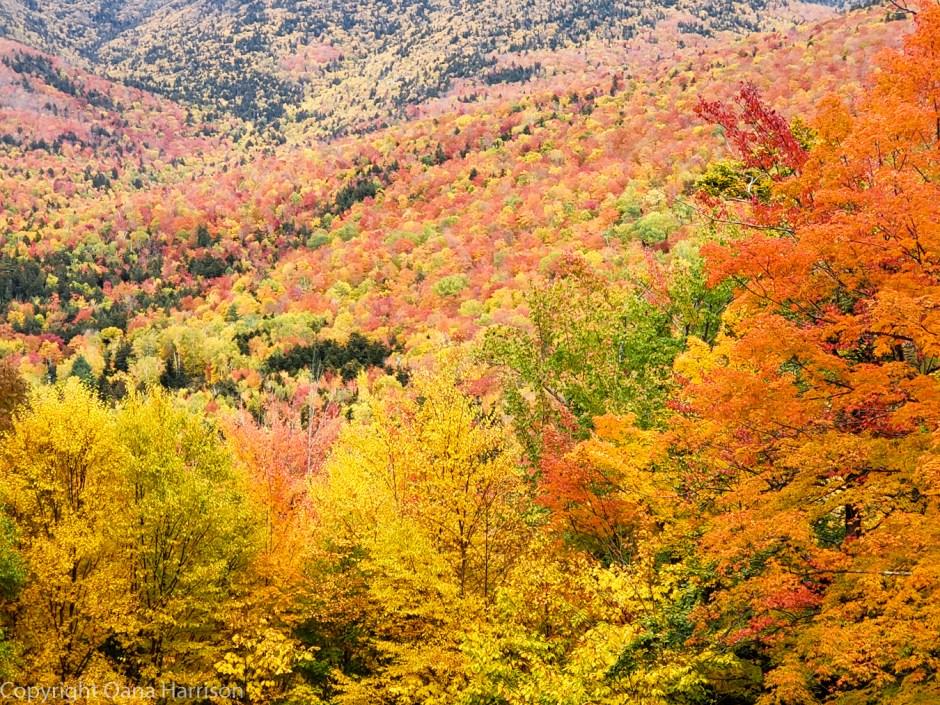 Fall colors on Mount Washington