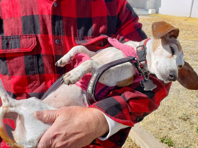 Marfa Texas tired Roxie dog