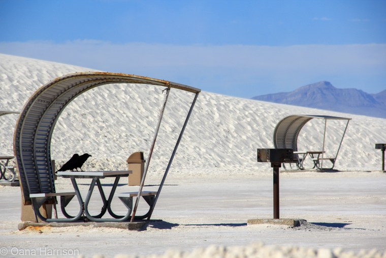Two crows at White Sands, New Mexico