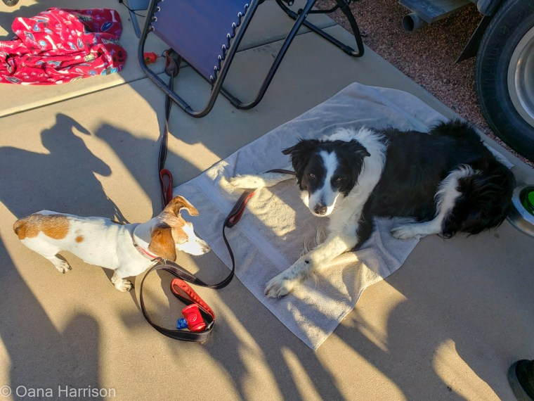 Las Colinas RV Park Eloy Arizona Kylie and Roxie dogs