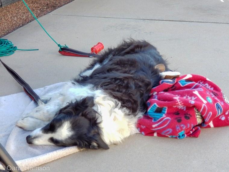 Las Colinas RV Park Eloy Arizona Dogs Sleeping