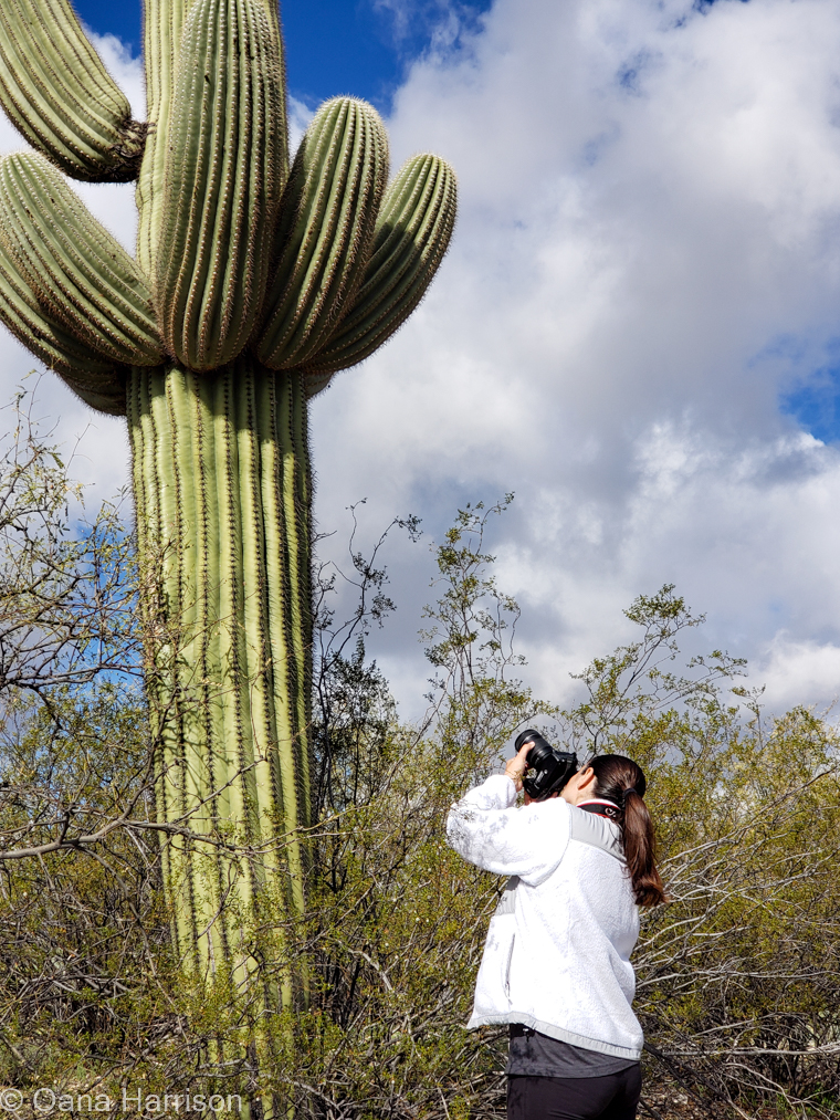 Saguaro National Park, Arizona; Oana