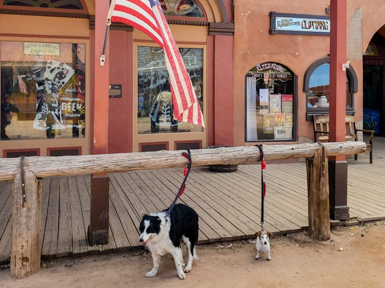 Dogs at Tombstone horse hitch