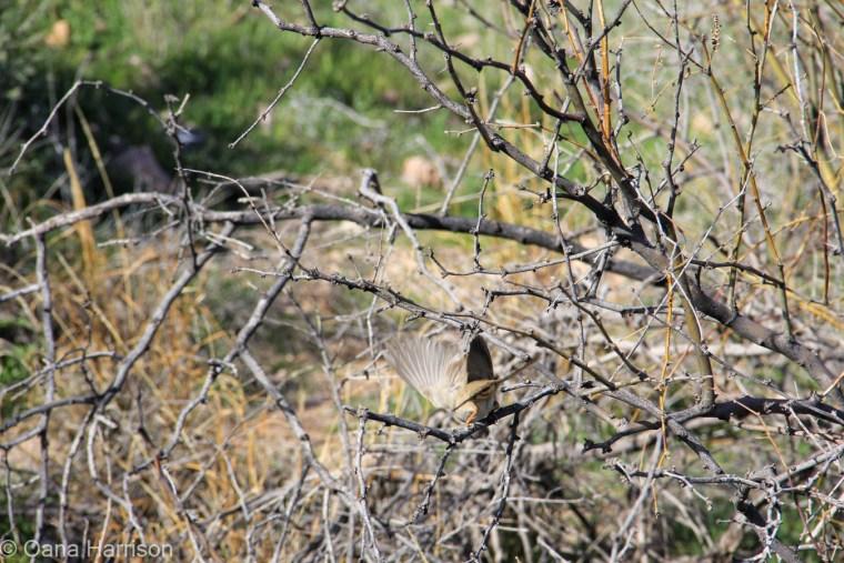 Bird, Jerome, Arizona