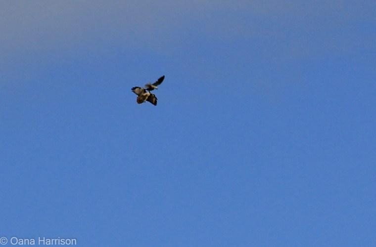 San Diego, California, Sweetwater County Park birds
