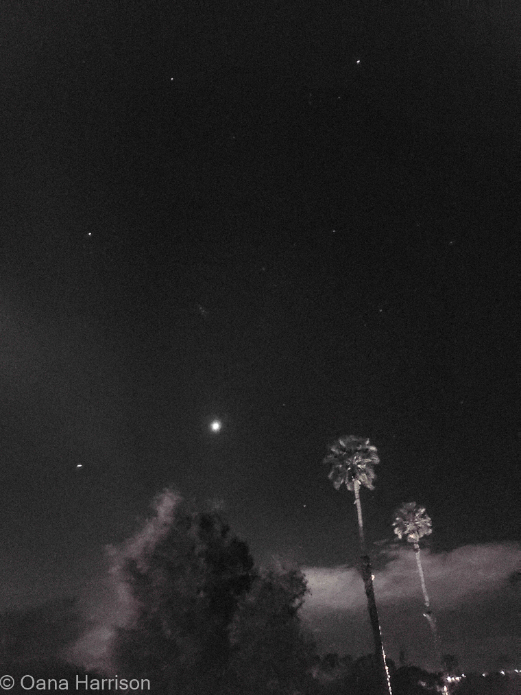 Sky Valley Desert Hot Springs CA, night sky with palm trees