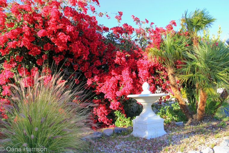 Sky Valley Desert Hot Springs CA, red bougainvillea and water fountain