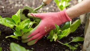 Get Inspired With These Great Garden Tips!