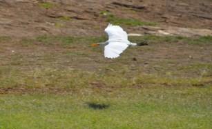 photo 2 Hawaii birds