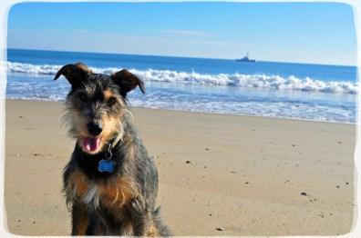 Charbie the Wander Dog