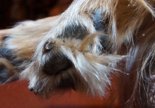 More Fluffy Dog Toes