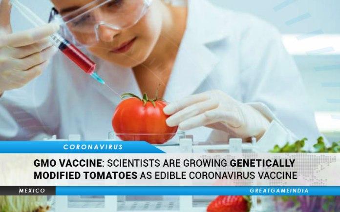 GMO Tomatoes Coronavirus Vaccine