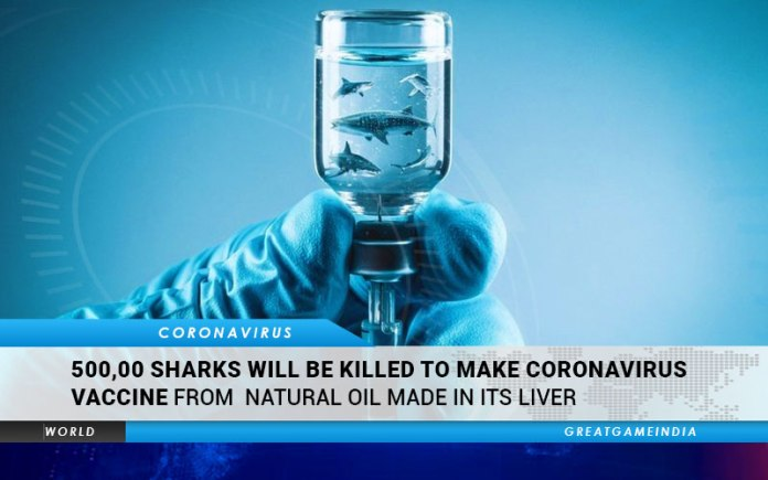 500,000 Sharks Will Be Killed To Make Coronavirus Vaccine From Natural Oil Made In Its Liver