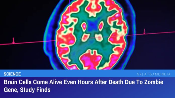 Brain Cells Come Alive Even Hours After Death Due To Zombie Gene, Study Finds