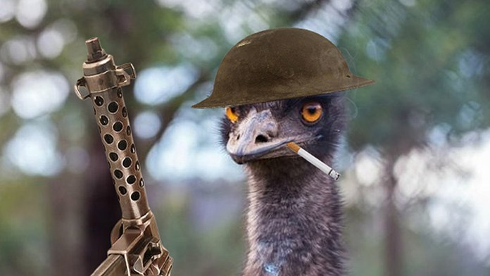 Australia's Great Emu War: How A Nation Declared War On A Bird And Lost