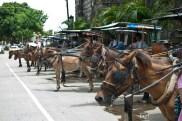Calesa rides waiting for the passengers at Ilocos, Philippines.