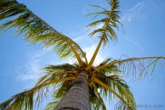 During a trip to Subic, Philippines: I was tired, so i sat myself under this coconut tree and took a moment to look up.