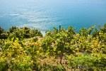 Trekking along the coastline through vineyards.