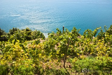Trekking along the coastline through vineyards.
