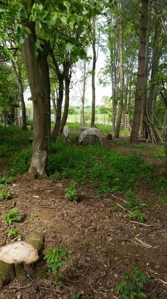 Great Ground woodland copse