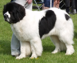 Open Dog Show