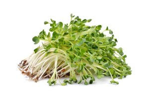 Alfalfa Products