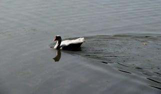 Lake In Moti Jheel