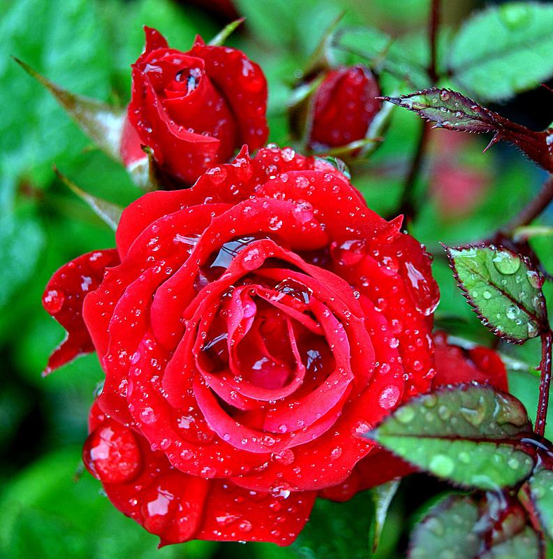 Raindrops Falling On Flowers Wallpaper Beautiful Rain ...