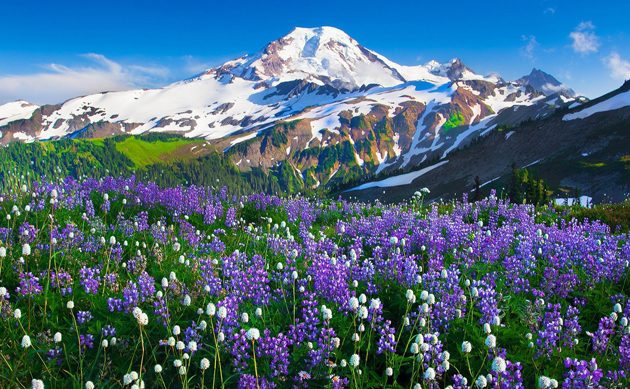 Cute Baby Bulldog Wallpaper Flowers That Blossom On Mountain Slopes Great Inspire