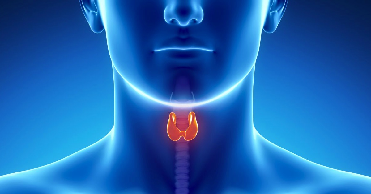 "Thyroid Hormone ""Sobetirome"" Identified As A Treatment for Allan-Herndon-Dudley Syndrome"