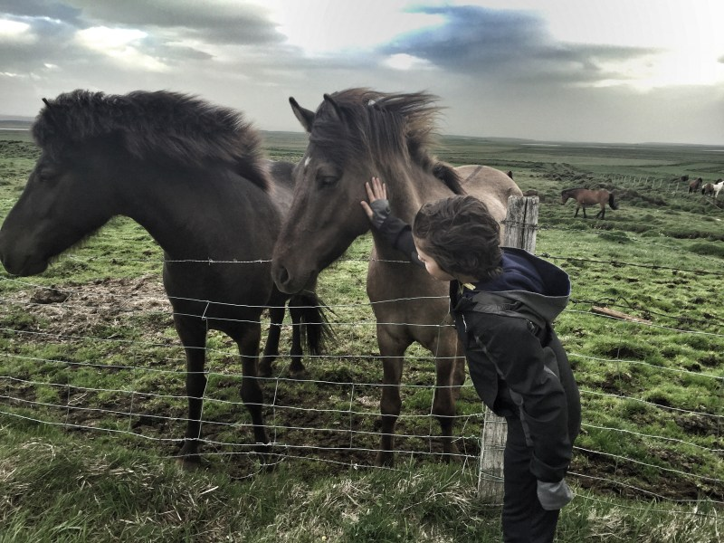 Kasm saying hello to Icelandic horses