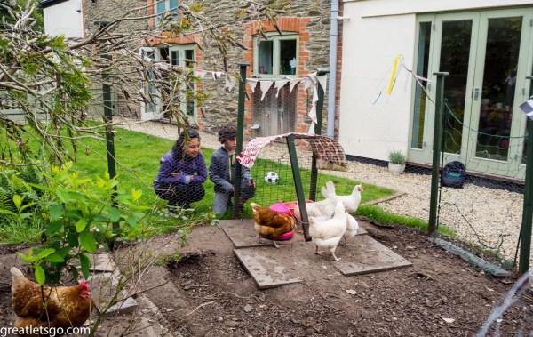 Chickens in Fowey, UK