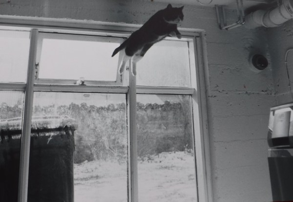 The Flying Cat - Picture of a Picture
