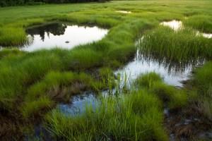 Salt marsh, Essex