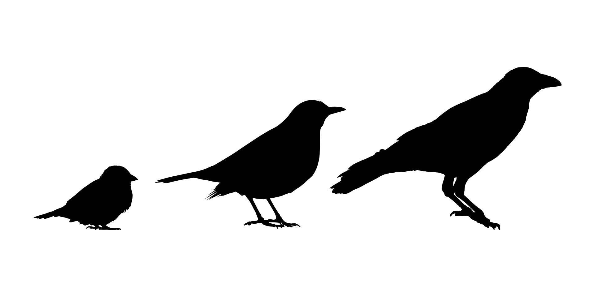 Bird Identification Basics