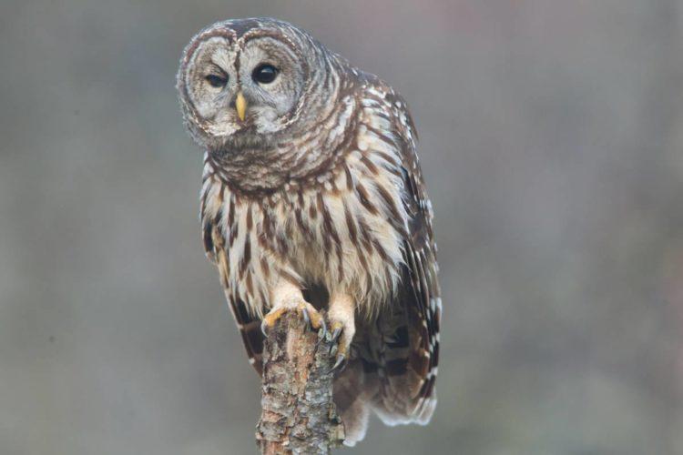 Beginner Birder Checklist  Great Missouri Birding Trail
