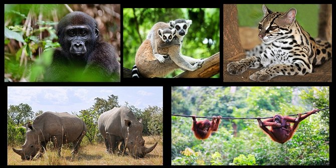 hewan asli indonesia