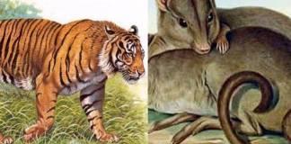 hewan indonesia yang punah