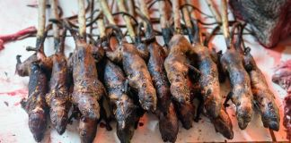 kawok makanan unik indonesia