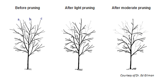 Spring Clean-up in the Landscape & Pruning Young Trees